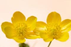 Lucie-duo-fleuri
