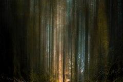 Rodrigue-forêt-fantastique