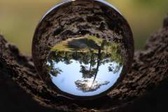 Thierry-arbre-a-bulle