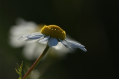 Elisa-du-miel-pour-les-abeilles