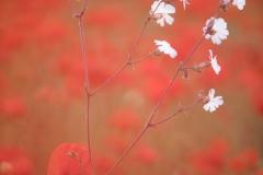 Pascale-rouge-et-blanc