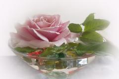 Elisa-Rose-du-matin