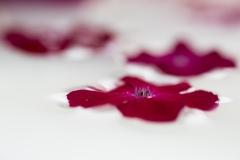Pascale-le-rose-des-coquelourdes