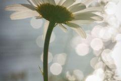 12-Fleur-féérique